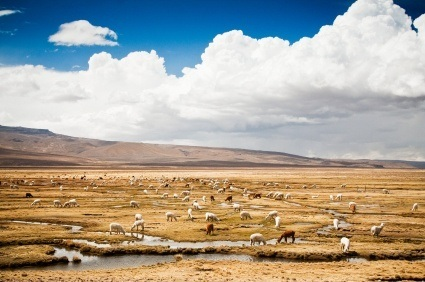photo d'un paysage d'amérique du sud avec des alpagas