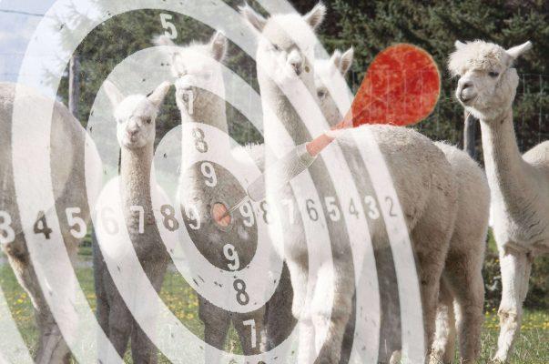 objectifs élevage alpaga