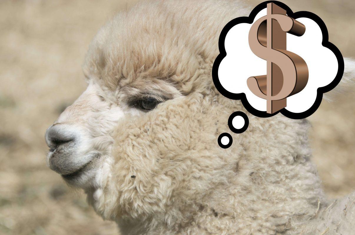 Prix alpaga - combien coûte un alpaga