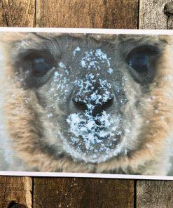 photo alpaga neige canvas cadre
